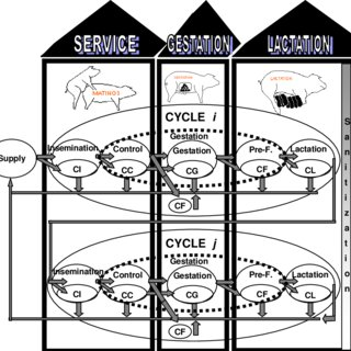 Pork Supply Chain planning decisions, adapted from