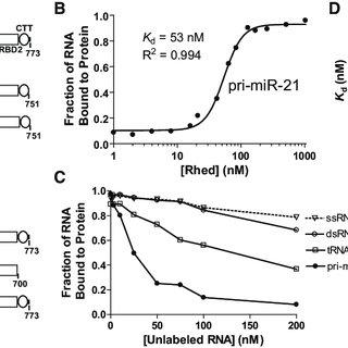 (PDF) The DGCR8 RNA-binding heme domain recognizes primary
