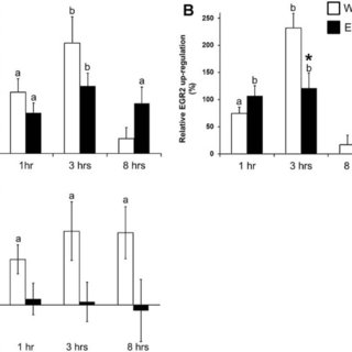 Effect of loading on ERE-mediated luciferase activity in
