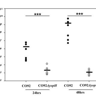 YopH phosphatase activity is required for Y. pestis