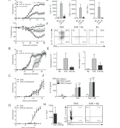 respiratory infection with b pertussis suppresses attenuates eae associated with suppression of pathogenic t cell migrating into the cns  [ 850 x 936 Pixel ]