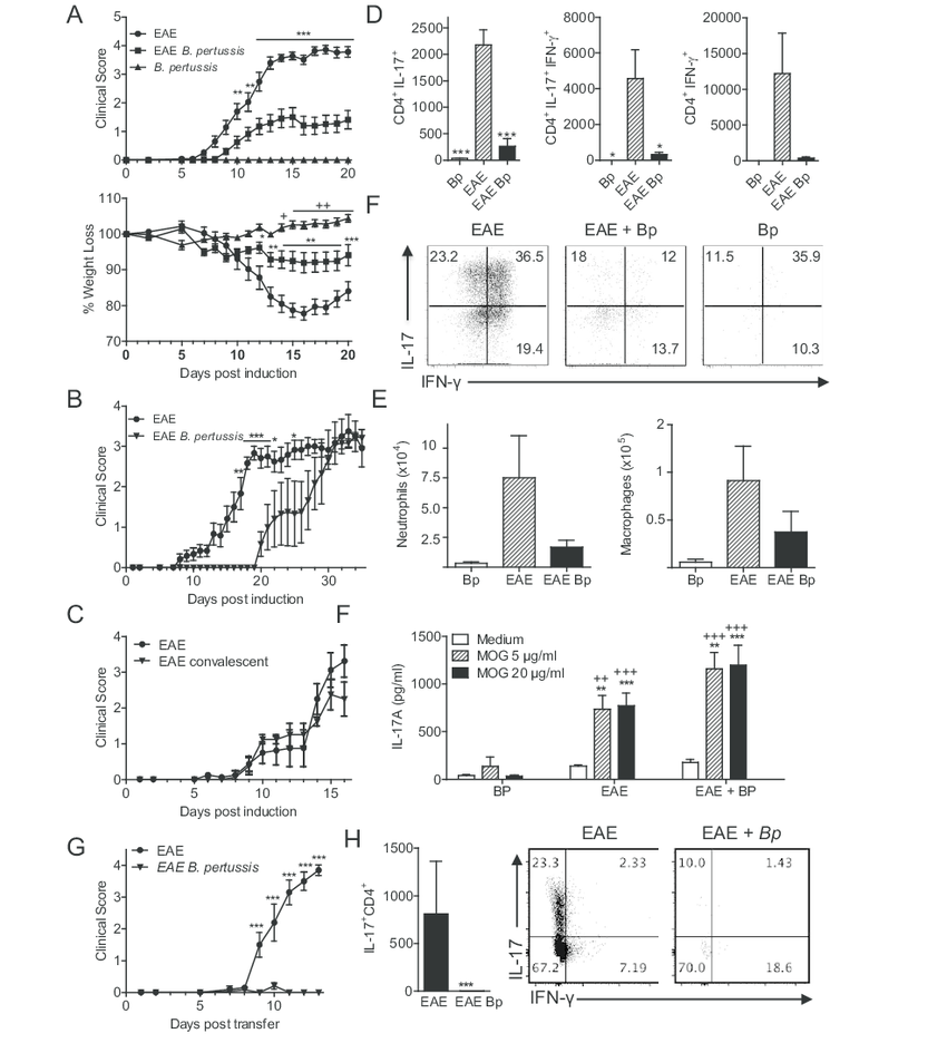 hight resolution of respiratory infection with b pertussis suppresses attenuates eae associated with suppression of pathogenic t cell migrating into the cns