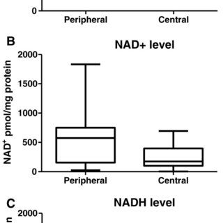 The effect of hypoxia on NAD+/NADH levels and endogenous