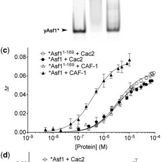 CAF-1 interacts primarily in the monomeric form with H3/H4