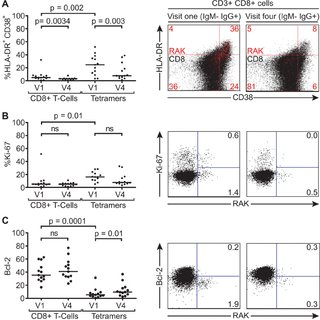Activation, proliferation and Bcl-2 status of total and