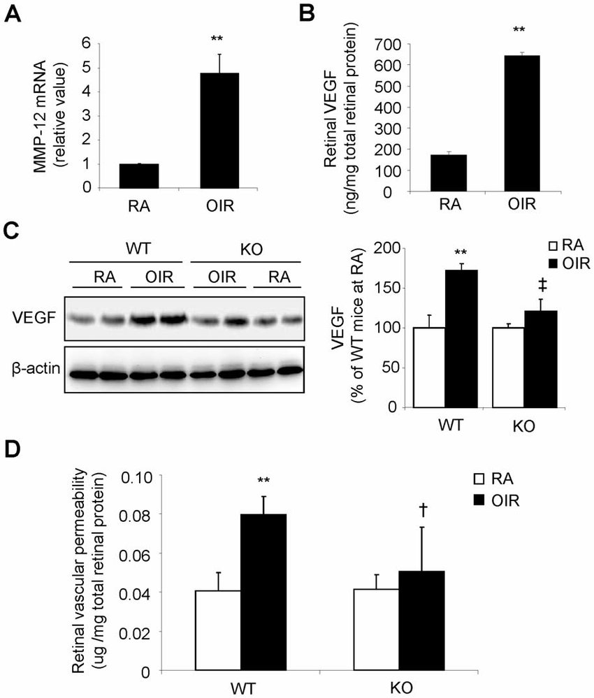 Reduced retinal VEGF expression and vascular leakage in