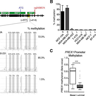 Differential P-REX1 expression and methylation of the