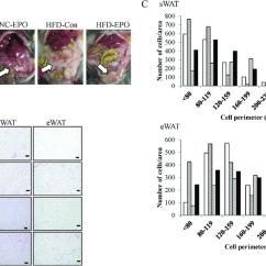 White Fat Cell Diagram Pir Wiring Lighting Effect Of Erythropoietin Epo On Adipose Tissue Wat Histology Download Scientific