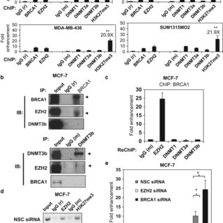 (PDF) FOXA1 repression is associated with loss of BRCA1