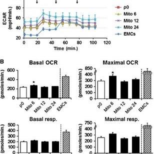 Impact of the macropinocytosis inhibitor EIPA on