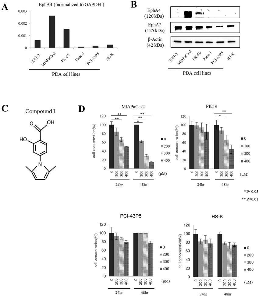 hight resolution of expression of epha4 and epha2 in human pdac cell lines and the effect of compound 1 on tumor cell proliferation in vitro a quantitative rt pcr analysis