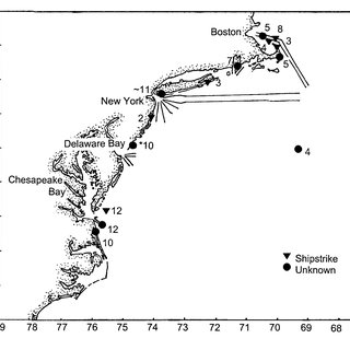 Right whale fatalities and shipping lanes in the Gulf of
