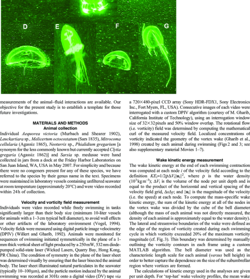 small resolution of hydrozoan jellyfish as observed in digital particle image velocimetry download scientific diagram