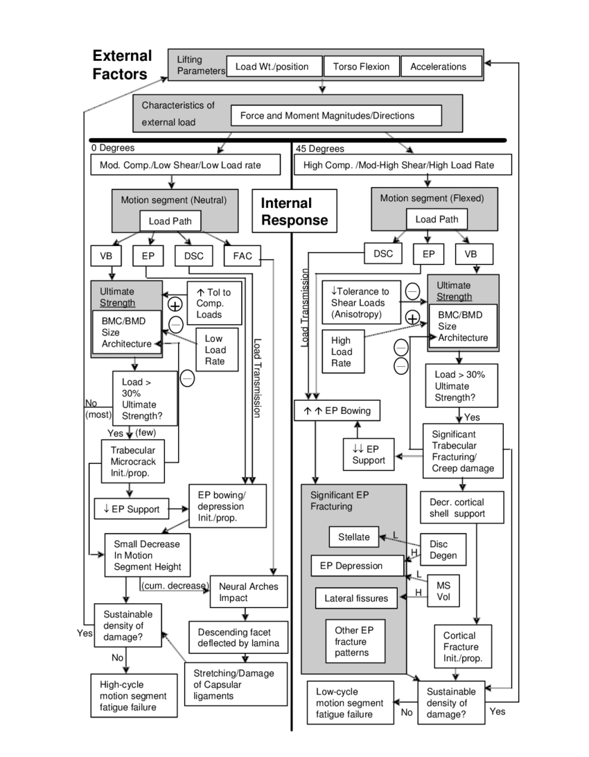 hight resolution of 1 a conceptual model of the effects of lifting in torso flexion on damage to