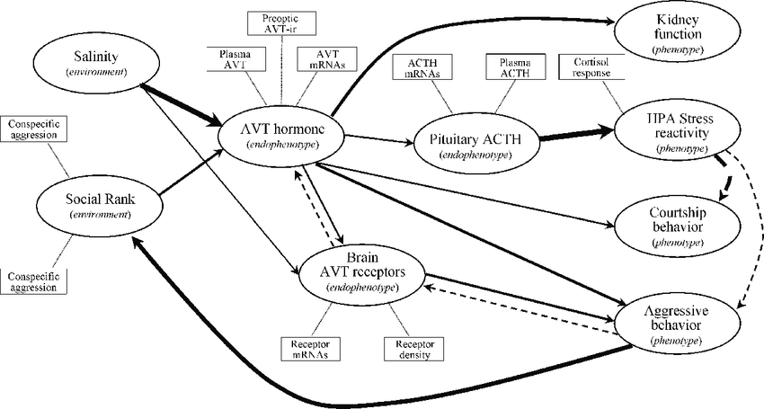 Illustration of a hypothetical path analysis model for