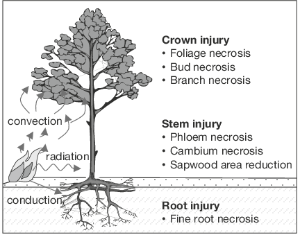 3 Mechanisms of heat transfer from a fire to plant root