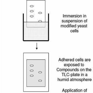 (PDF) Combination of High-Performance Thin-Layer