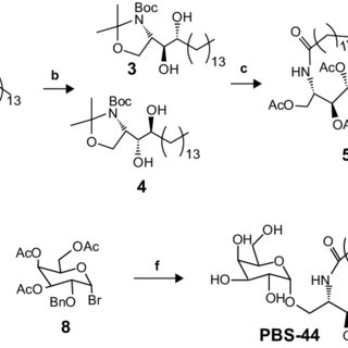 Design and synthesis of a novel ?galcer analog PBs-44