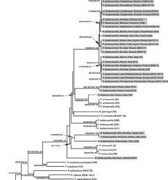 phylogram constructed for 53 paramecium strains and tetrahymena strain as an outgroup based on a [ 850 x 1155 Pixel ]