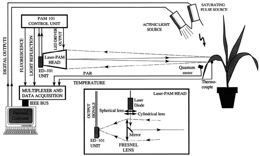 Schematic diagram of the Laser-PAM measuring system, used