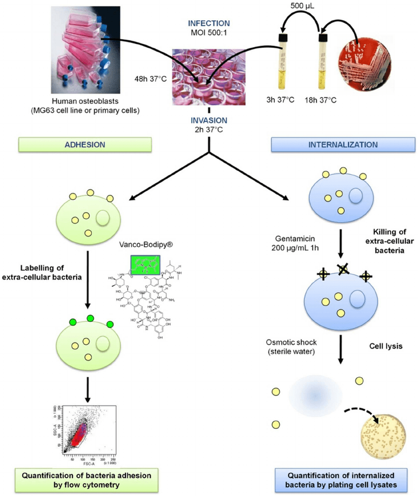 medium resolution of moi multiplicity of infection doi 10 1371 journal