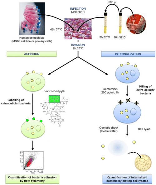 small resolution of moi multiplicity of infection doi 10 1371 journal