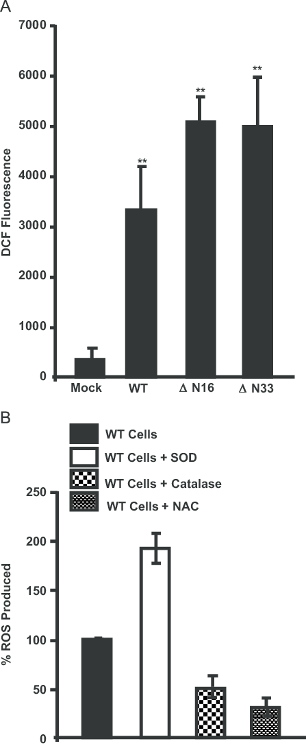ROS production by mitochondria targeted HO-1 (A) ROS