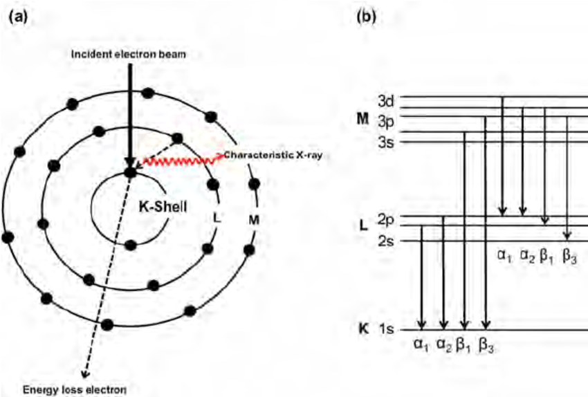 (a) A schematic illustration of the mechanism of the