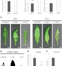 plant hormone profiling and application of ga and uniconazole  [ 850 x 1211 Pixel ]
