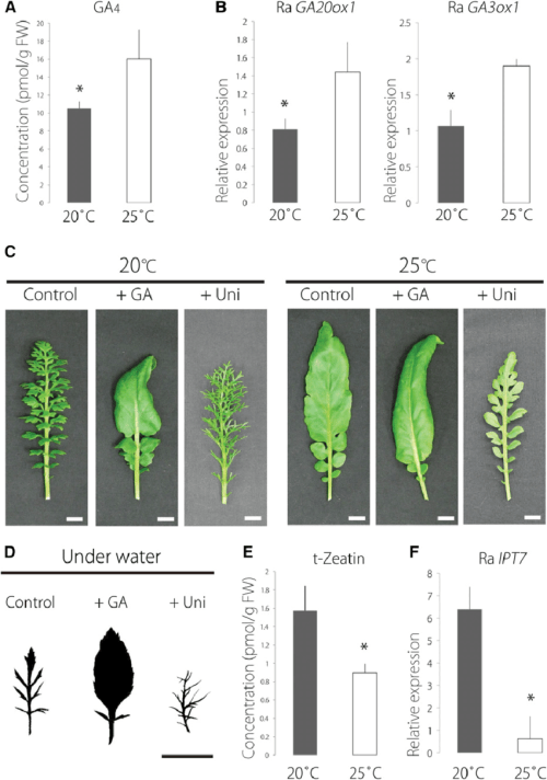 small resolution of plant hormone profiling and application of ga and uniconazole