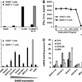 (PDF) A Human ErbB2-Specific T-Cell Receptor Confers