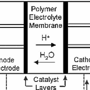 (PDF) Modeling and analyzing the proton exchange membrane