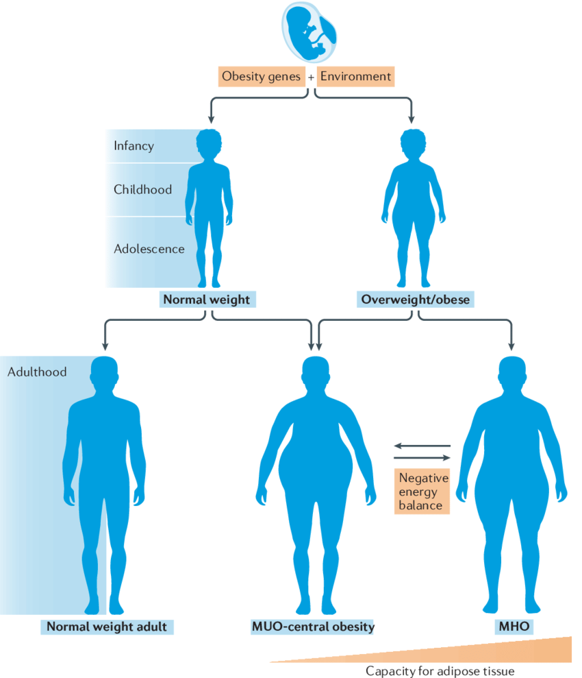 hight resolution of diagram of body fat obese