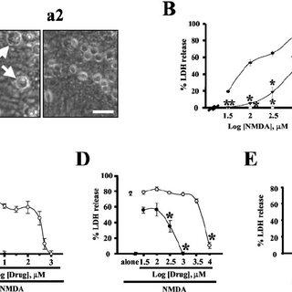 (PDF) The Novel Neuroprotective Action of Sulfasalazine