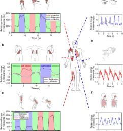 whole body motion monitoring system six basic joint level movements  [ 850 x 992 Pixel ]