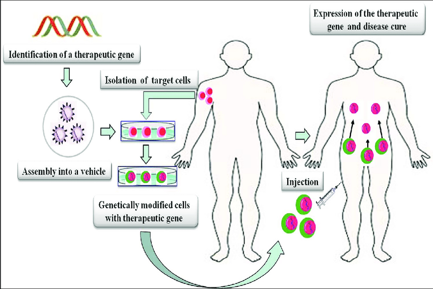 in vivo gene therapy diagram types of diagrams and charts strategies for ex is performed download scientific