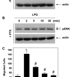 isolated human nk cells were preincubated in the absence a or presence b of ptx 100 ng ml for 24 h next the cells were stimulated  [ 753 x 1236 Pixel ]