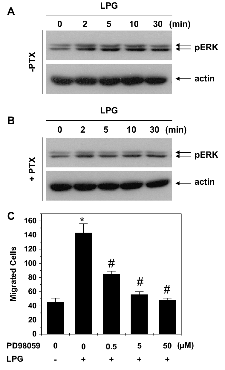 hight resolution of isolated human nk cells were preincubated in the absence a or presence b of ptx 100 ng ml for 24 h next the cells were stimulated