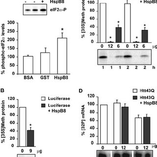 HspB8 ⅐ Bag3 decreases mutated huntingtin aggregation also