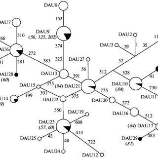 (PDF) Unidirectional Hybridization of Kaluga Acipenser