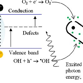 (A) Effect of algal cell adsorption on uncoated substrate