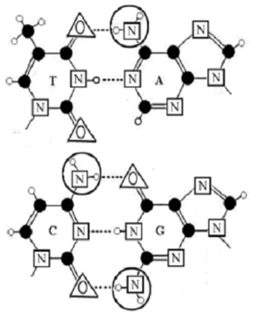 Three Punnett squares of monohybrid cross for the case of