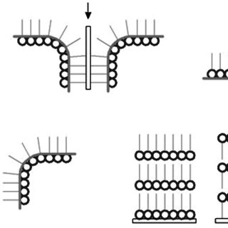 Different types of monolayer transfer onto solid