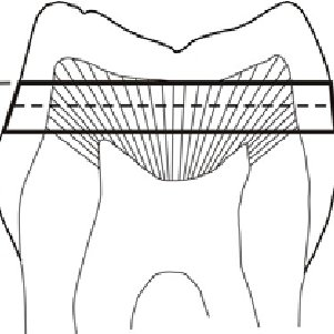 Scheme of the split-chamber device used to measure dentin