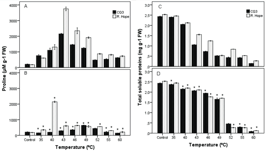Effect of high temperature on proline and total soluble
