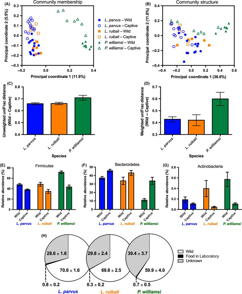 medium resolution of effects of captivity on the lizard gut microbiota a principal download scientific diagram