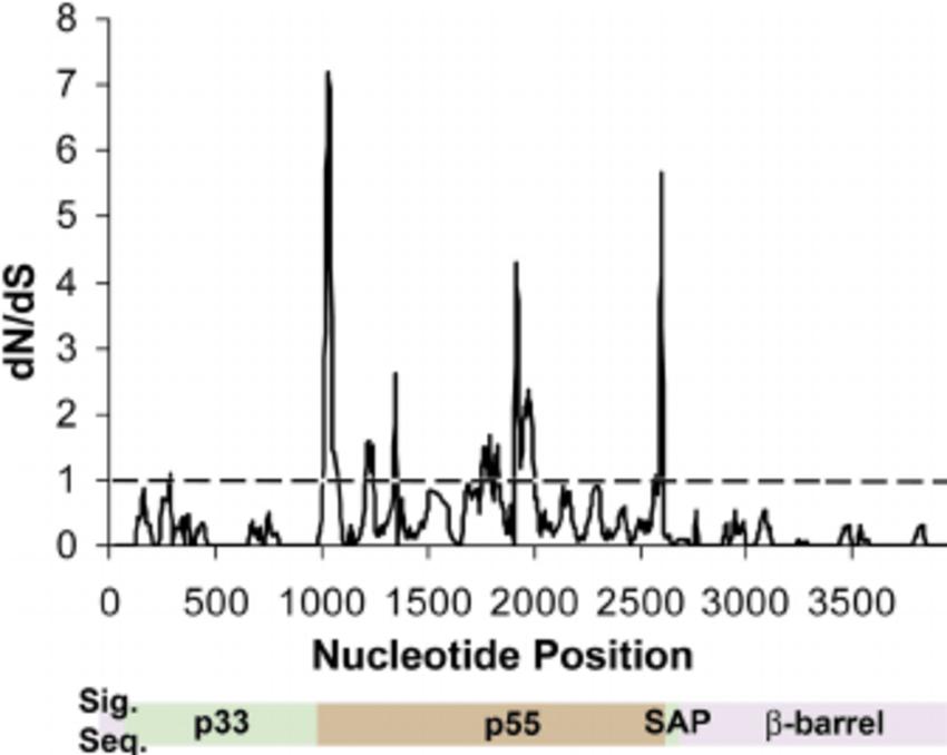 Sliding-window analysis of vacA from H. pylori strains
