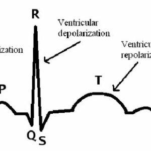 Block diagram of ECG circuitry | Download Scientific Diagram