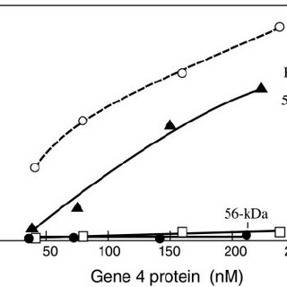 Two modes of primer synthesis catalyzed by gene 4 protein