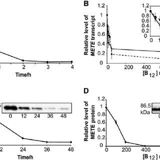 Simplified scheme of C 1 metabolism. 10CHO-THF